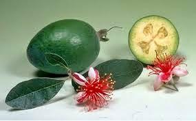 фрукт фейхоа