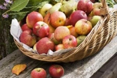 яблочный спас 2016 года
